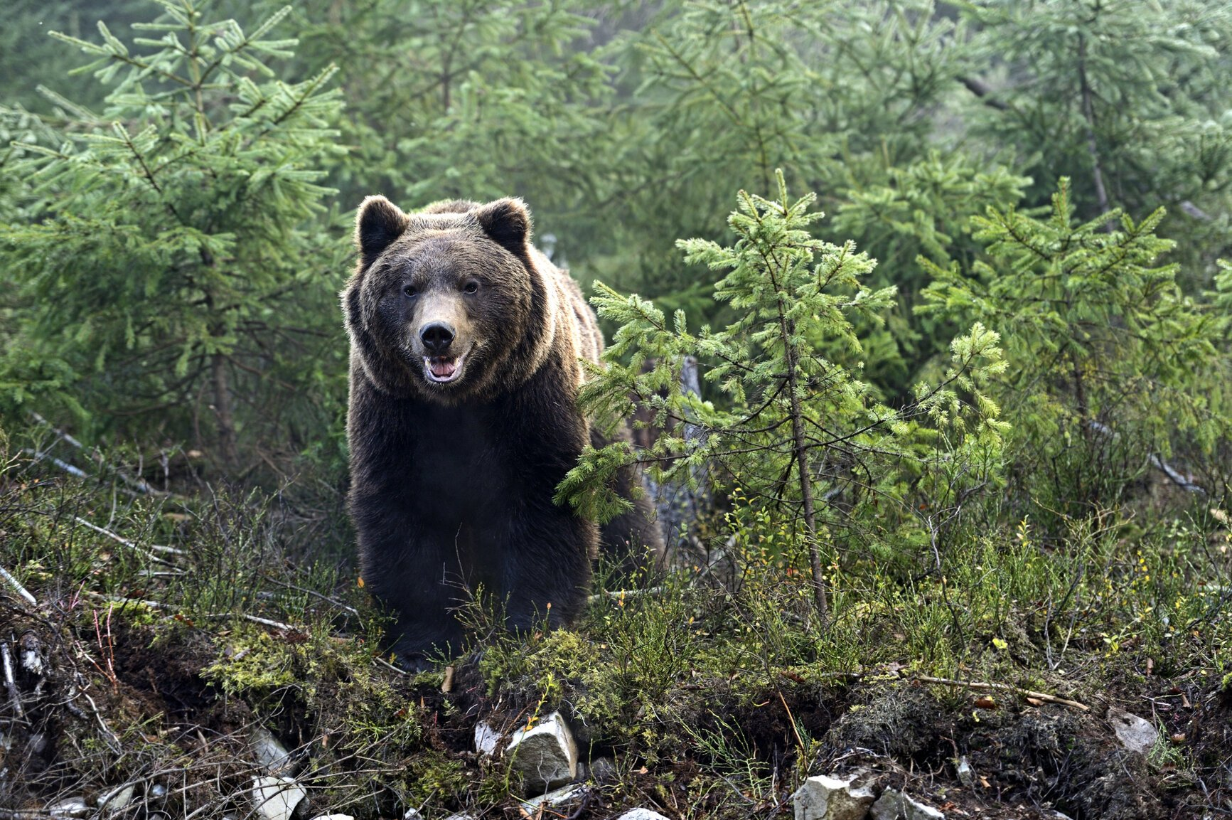 Выживший в Кемерово: охотник убит медведем, а его сын спасся на дереве