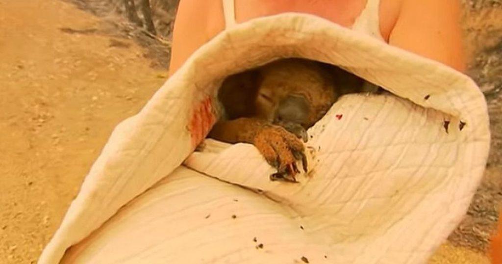 Около 13 видов животных в Австралии у черты исчезновения