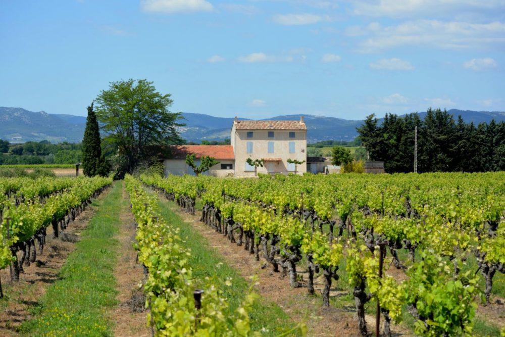 Франция: коронавирус — это катастрофа для производителей вина